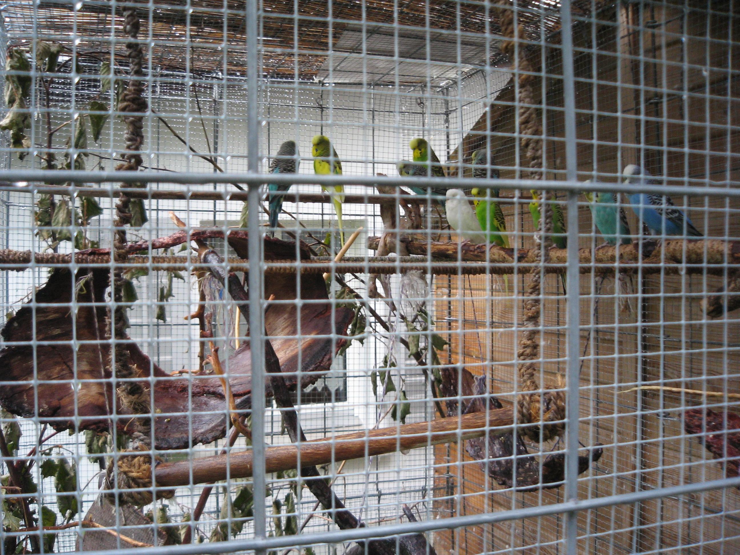Papagagls australians
