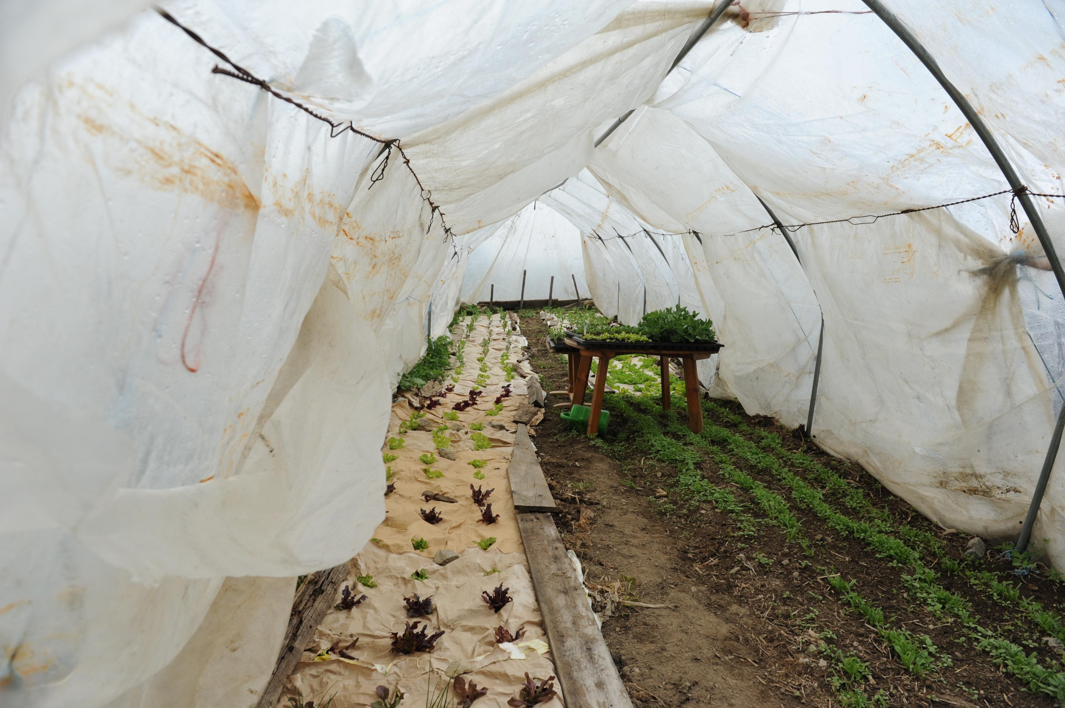 En quests tunnels pon Annamaria e Marcus Duff gia cumenzar mez avrigl a plantar salata e verduras.
