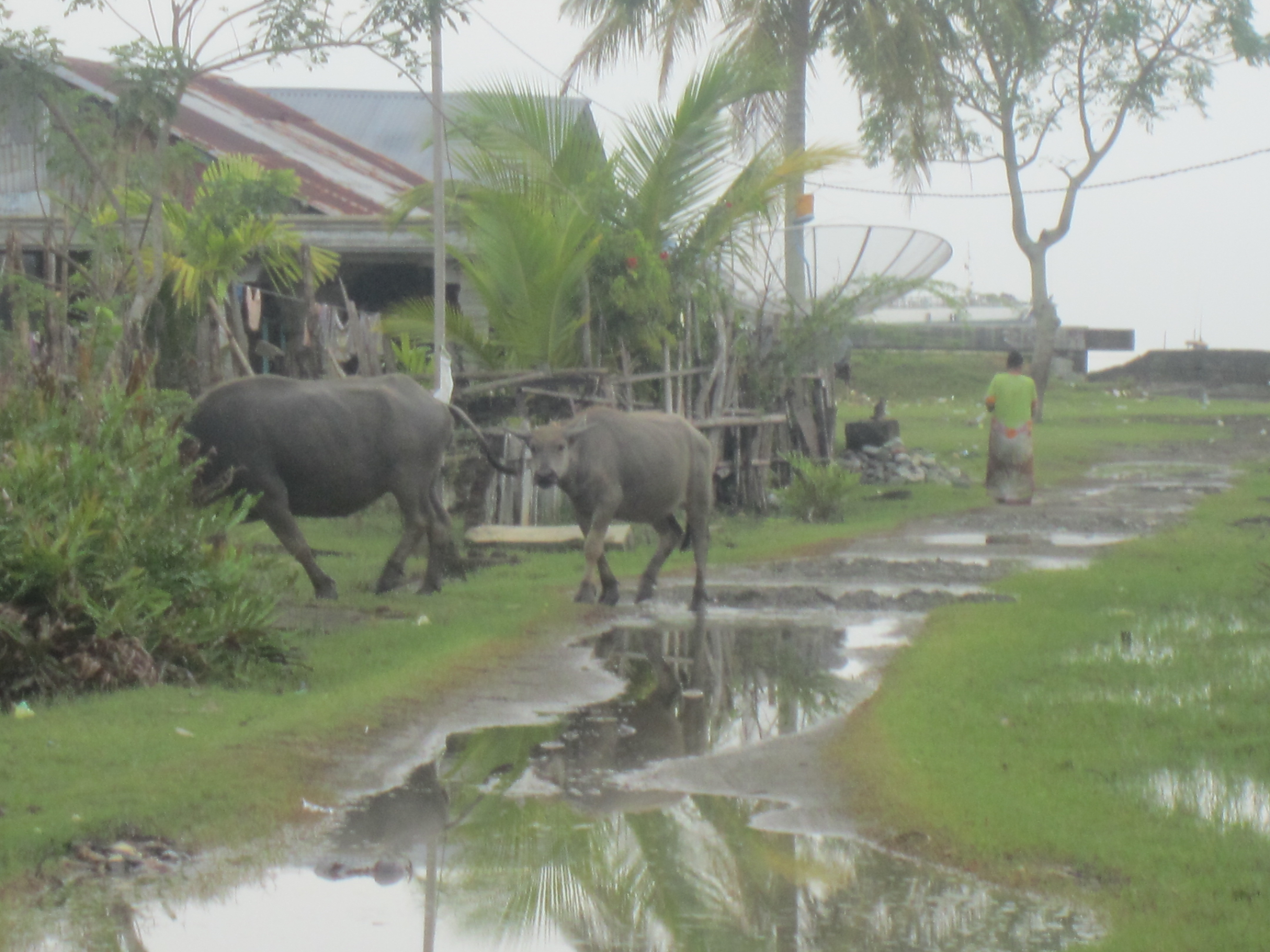 Questa part da Meulaboh era avant il tsunami anc abitada.